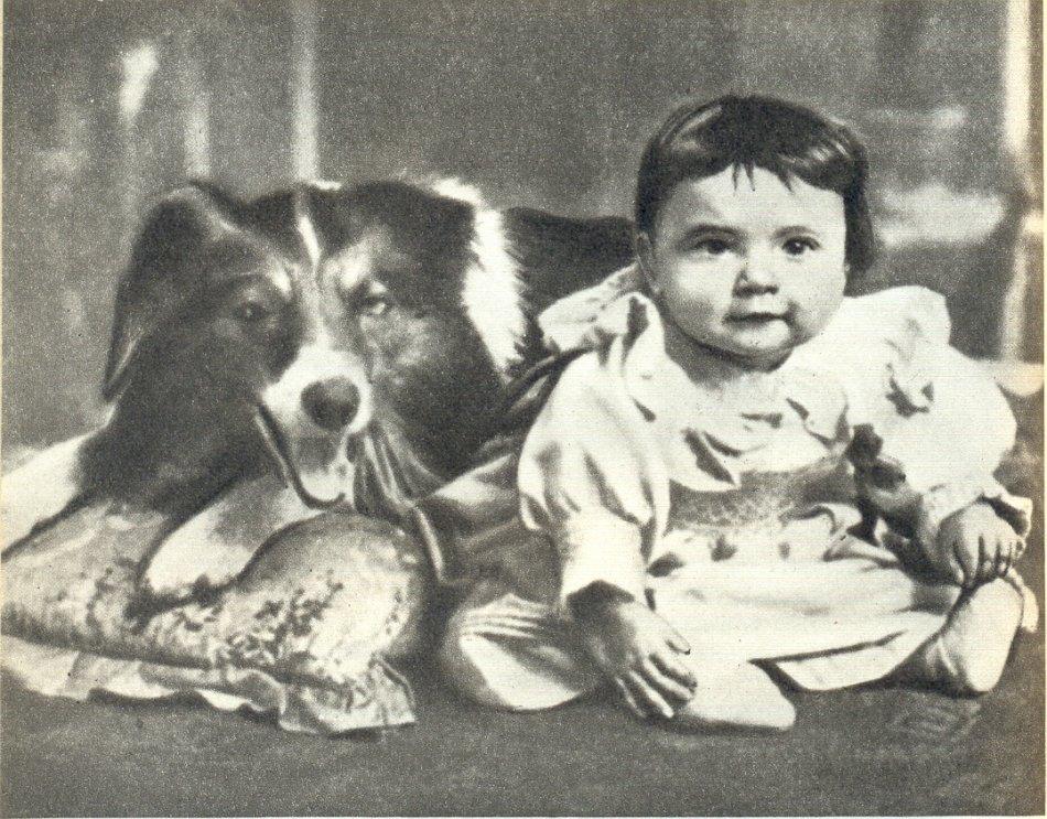 Блэр - первая собака-кинозвезда