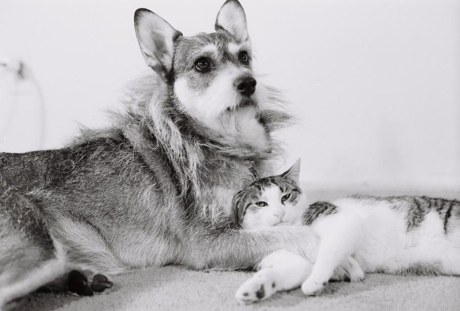 Джинни - собака-почетная кошка фото