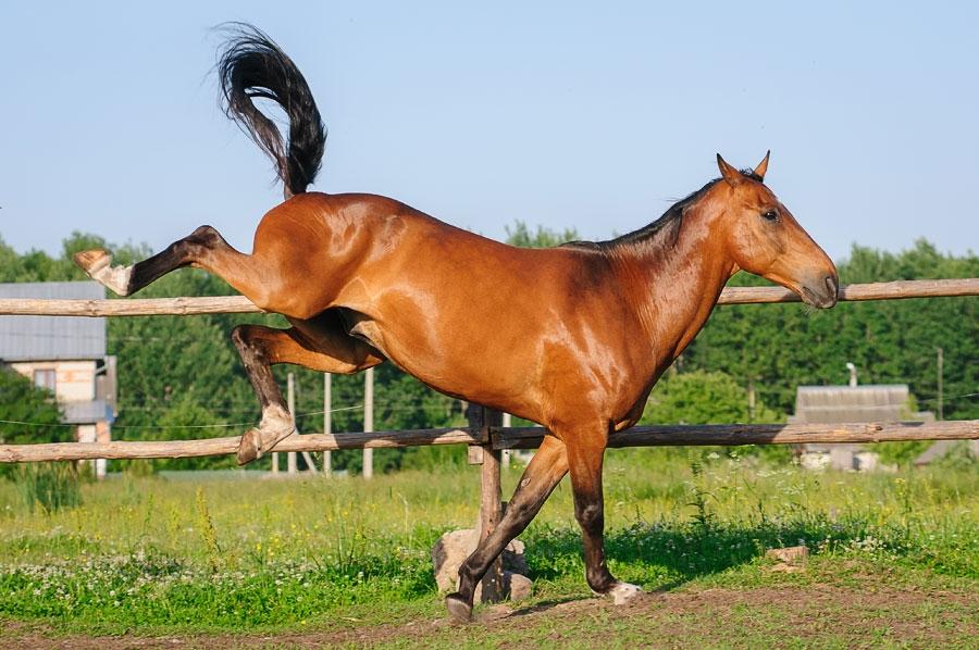 """Лошадь """"козлит"""" фото"""