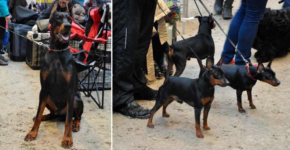 Ошейник для собаки фото