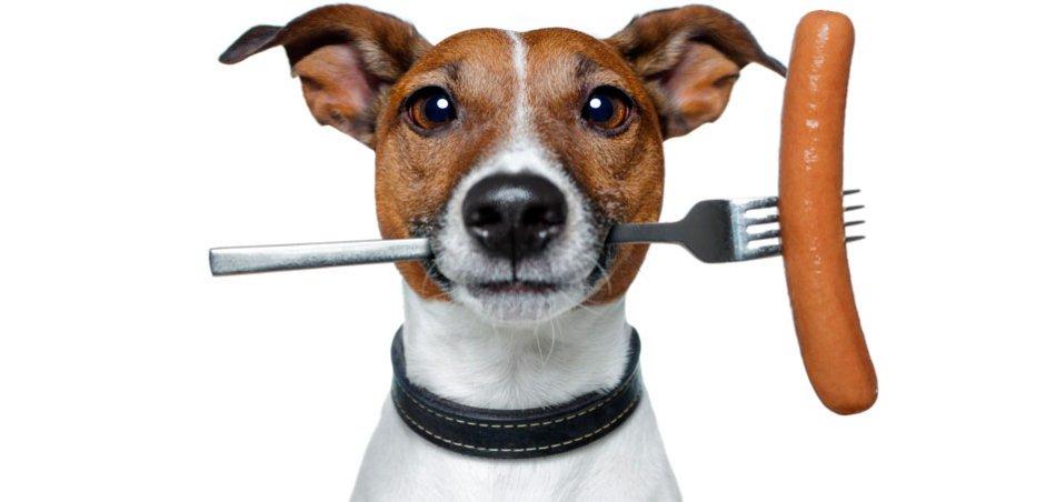 Натуральный корм для собаки