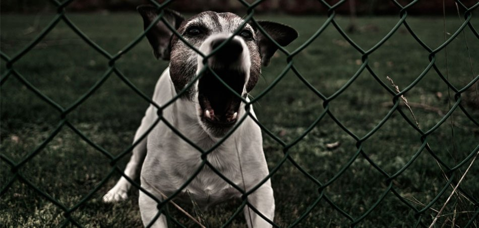 Собака лает за сетчатым забором