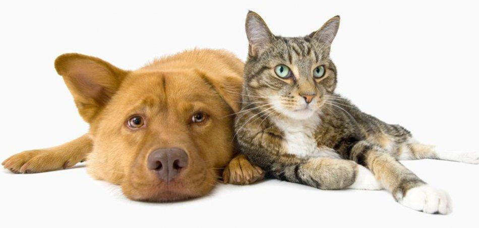 Собака и кошка фото