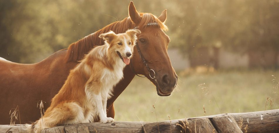 Собака и лошадь фото