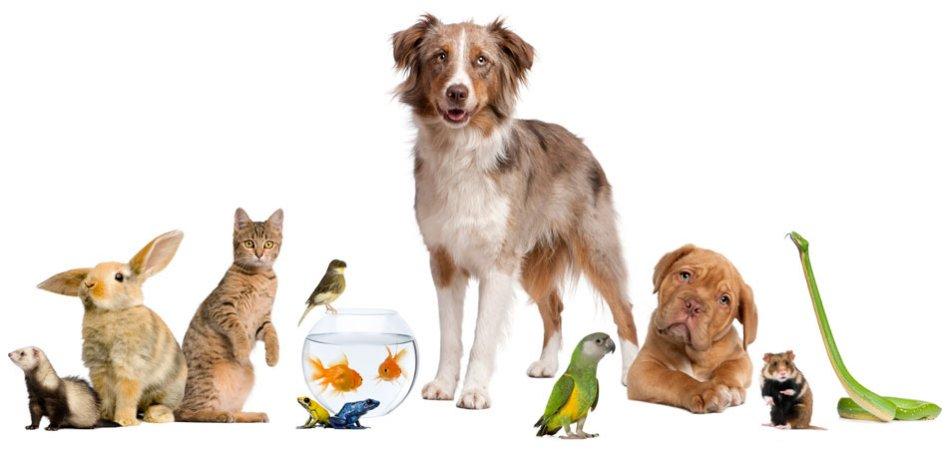 Собака и другие питомцы