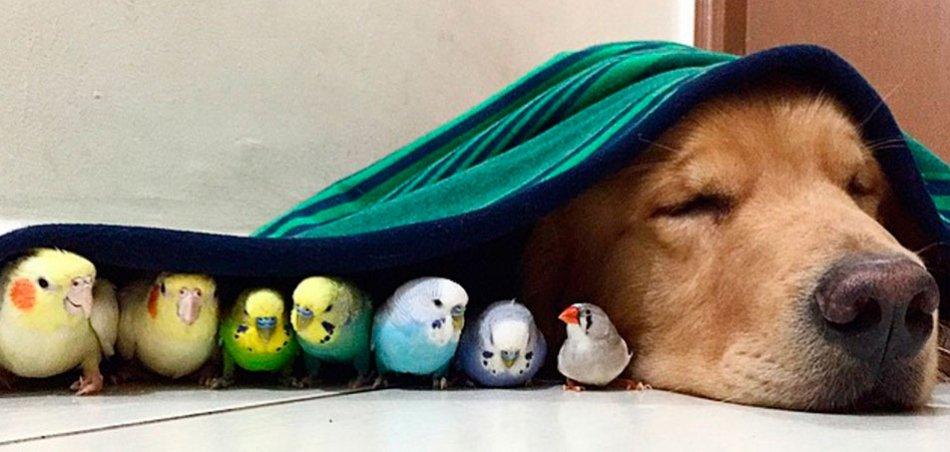 Собака и попугаи фото