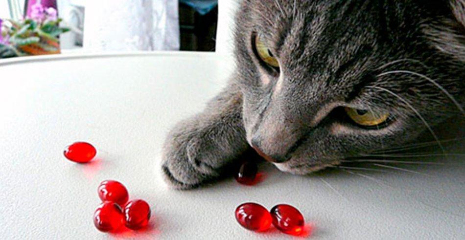 Кошка ест витамины фото