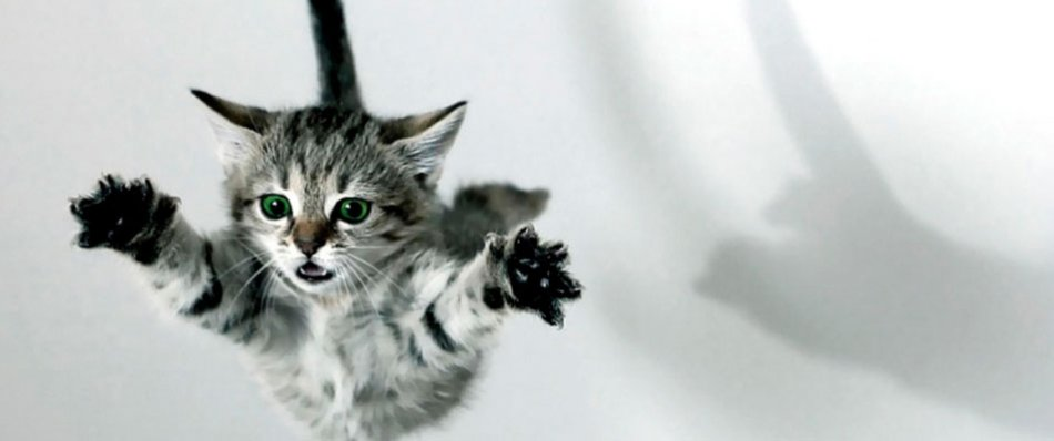 Серый котенок прыгает
