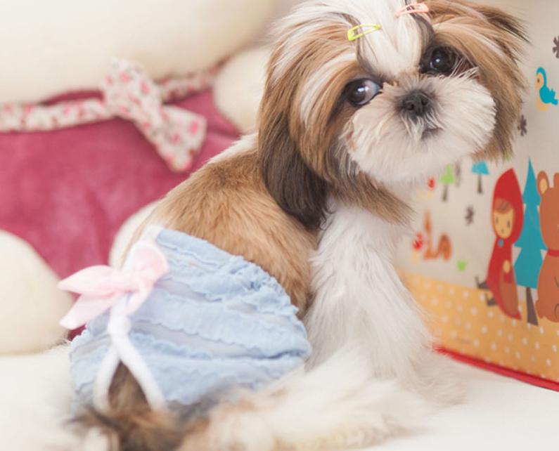 течка и беременность у собак