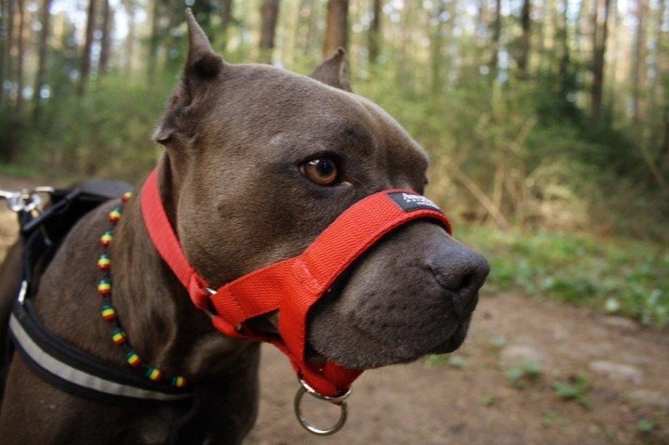 Халти для собаки фото