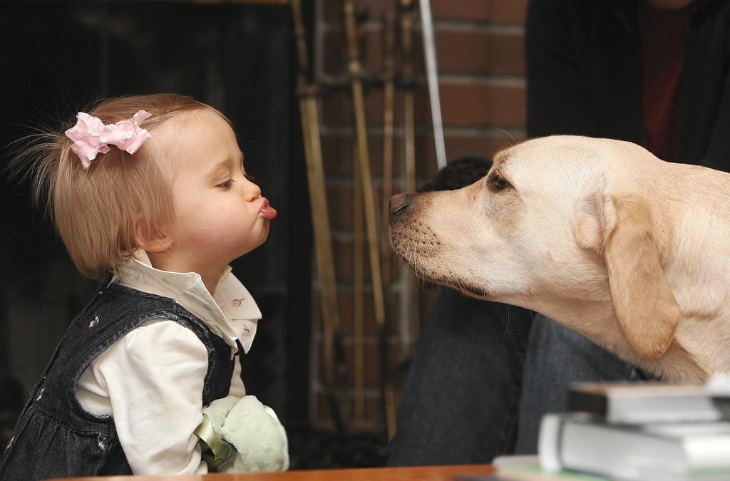 Комплиментом, картинки дети и собаки смешные