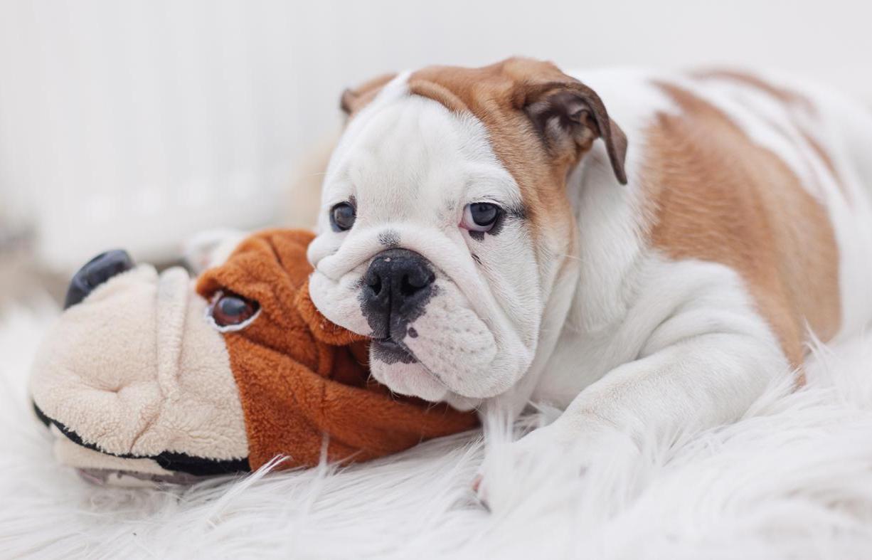 Первые дни щенка в доме как помочь питомцу адаптироваться