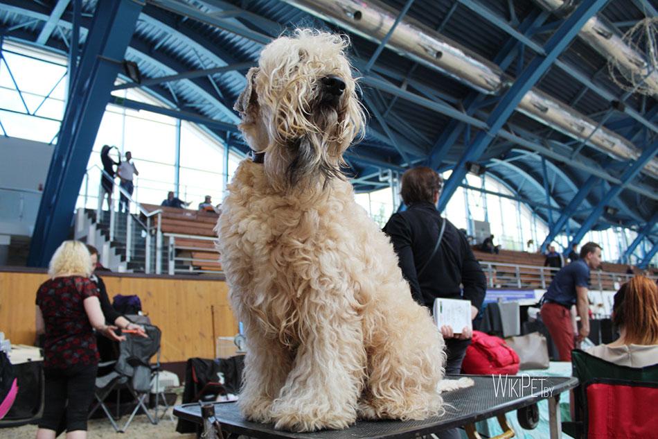 Международная выставка собак CACIB
