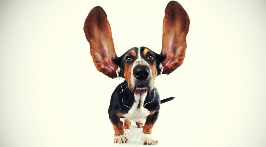 Собака в наушниках
