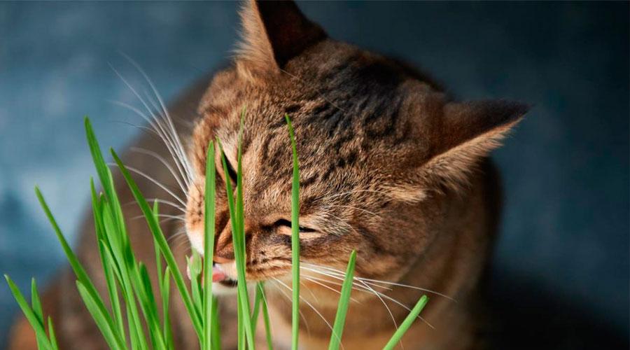 Кошка ест растения