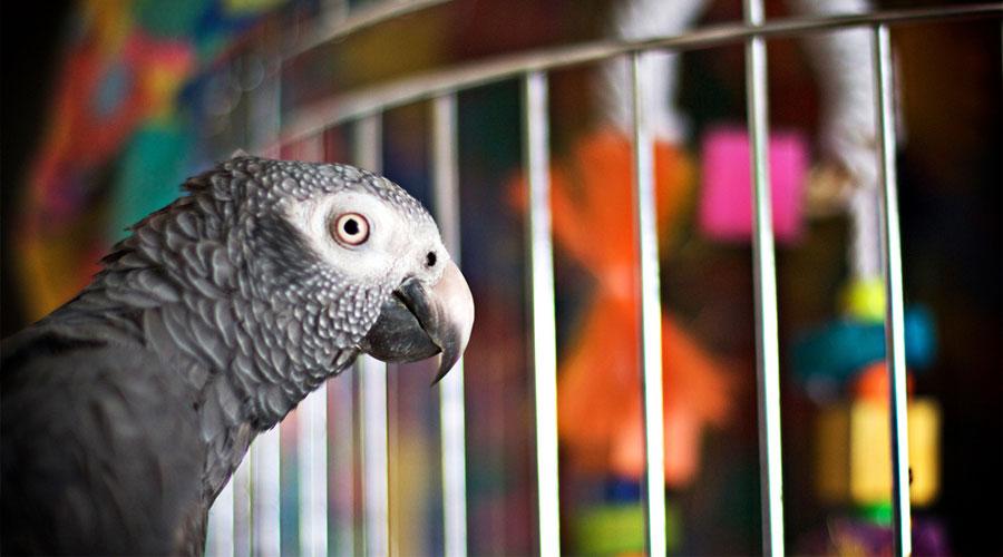 Попугай в клетке фото