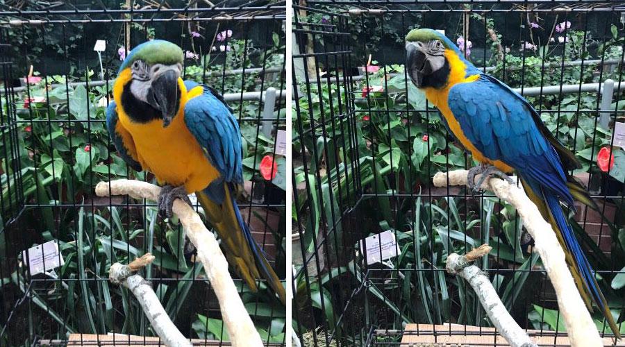 Попугай ара сидит на ветке в клетке