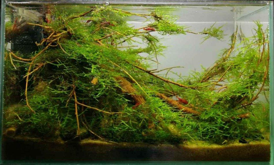 Украшение аквариума фото