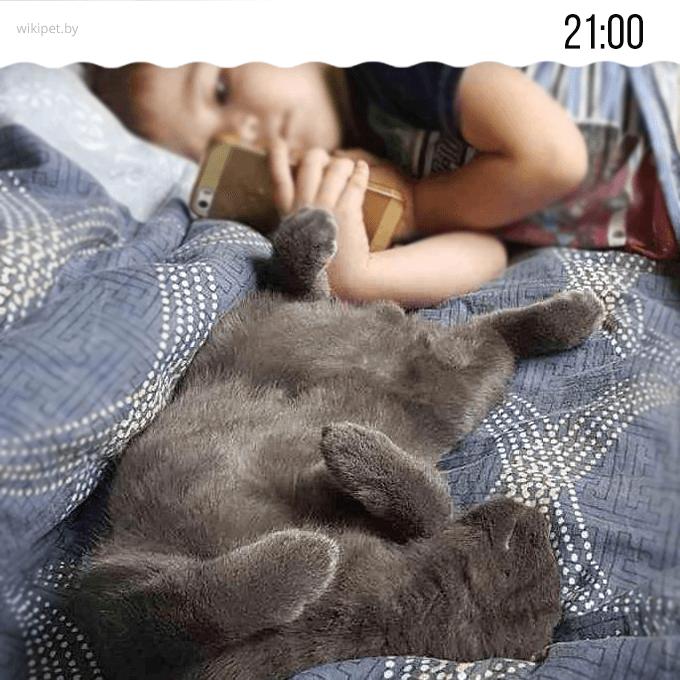 кот и ребенок спят вместе