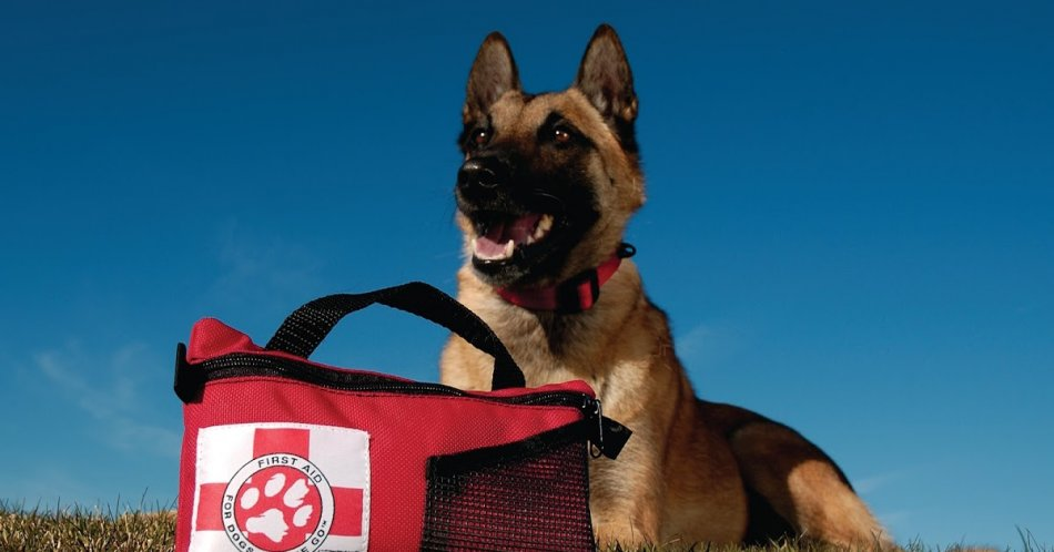 Дорожная аптечка для собаки фото