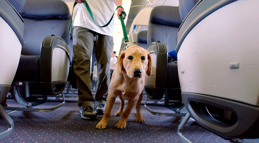 собака в салоне самолета