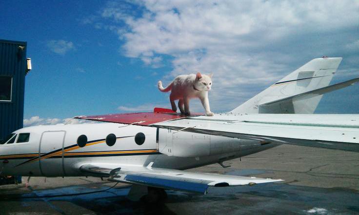 кот на самолете фото