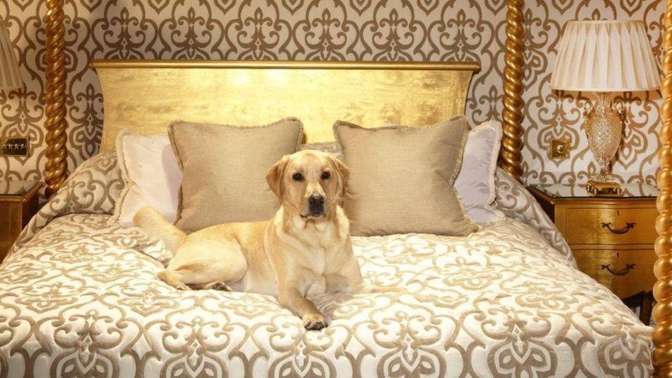собака в отеле фото