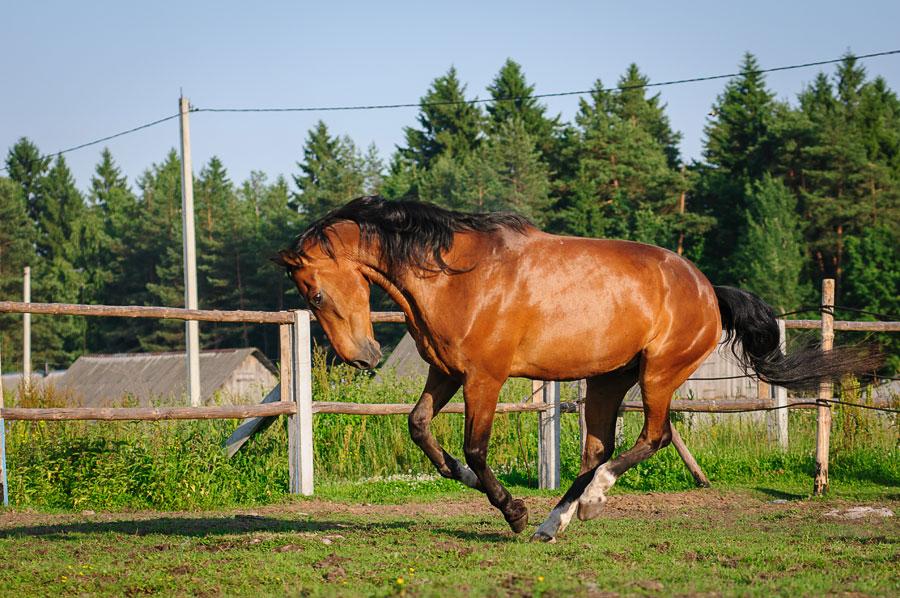 лошадь конь веселится
