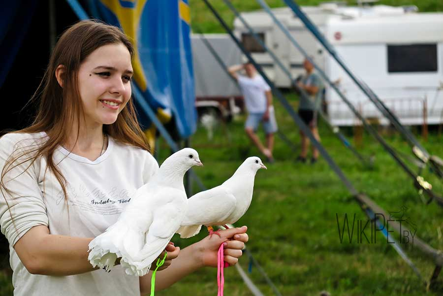 девочка с голубями