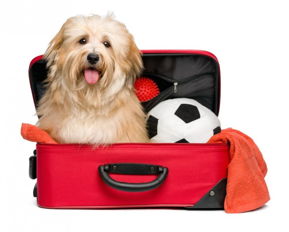 Собака в поездке фото