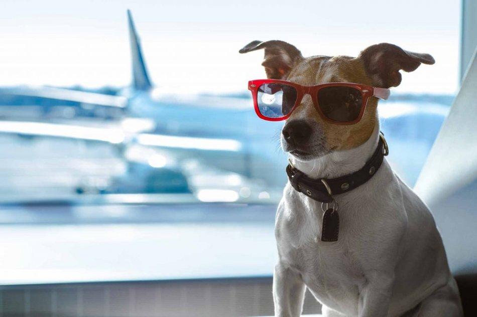 собака и самолет фото