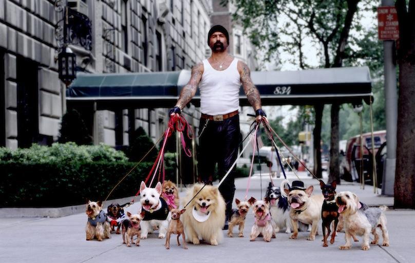 Человек выгуливает много собак фото