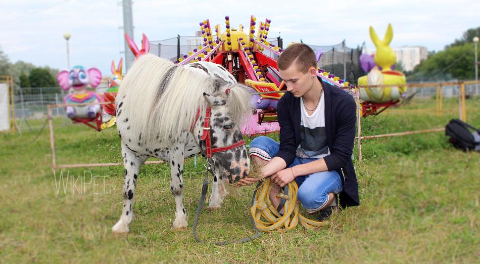 Цирковой пони