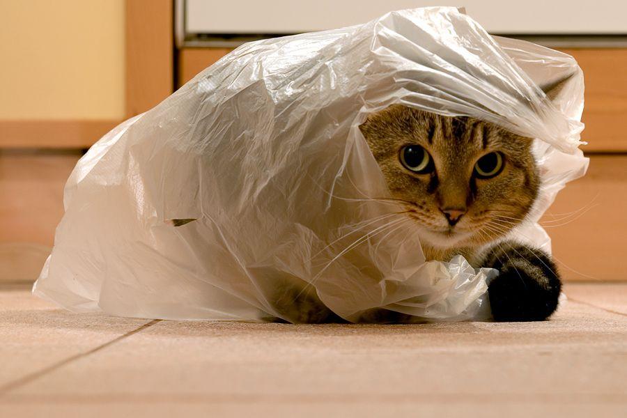 IQ-тест для кошки фото