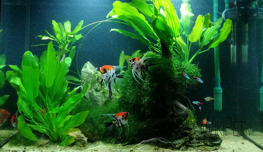 Биотопный аквариум фото