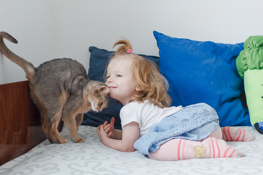 абиссинская кошка и ребенок фото