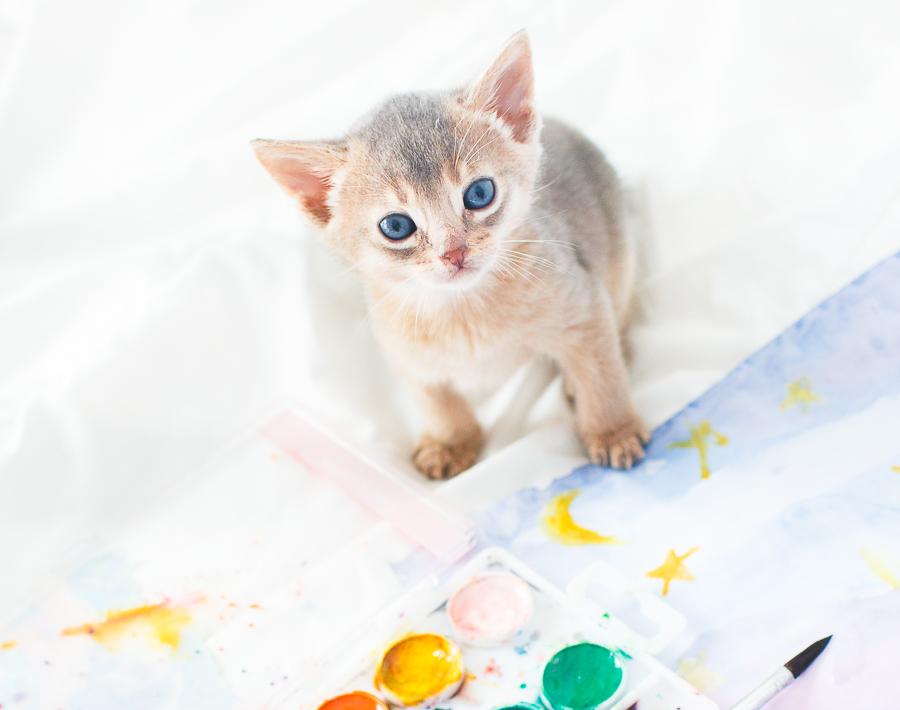 котенок абиссинской кошки красивый фото