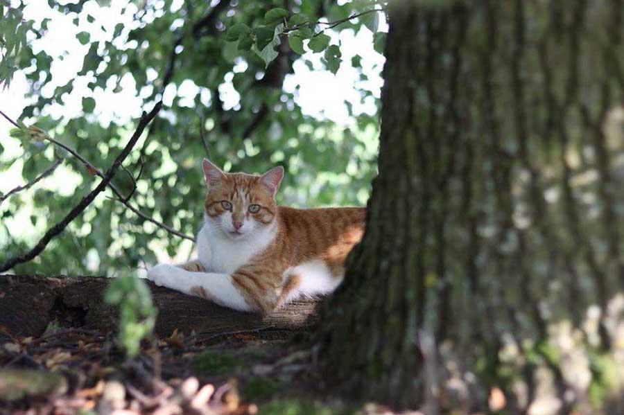 рыжая кошка на дереве