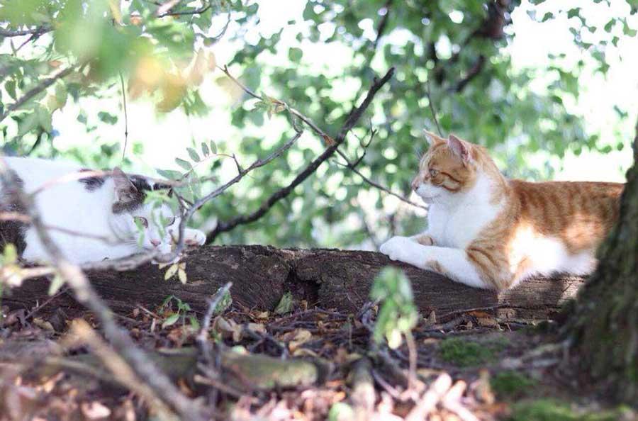 две кошки на дереве