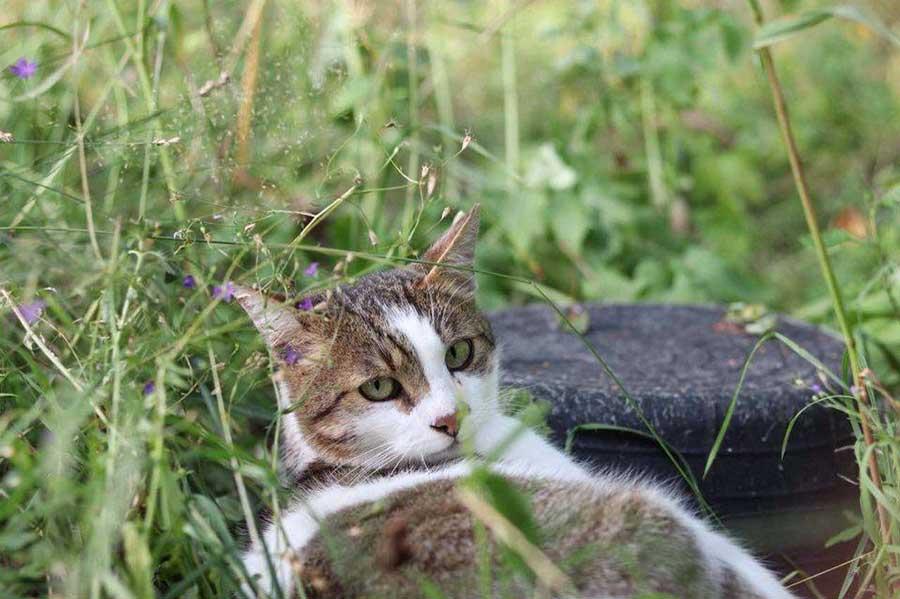 кошка лежит в траве