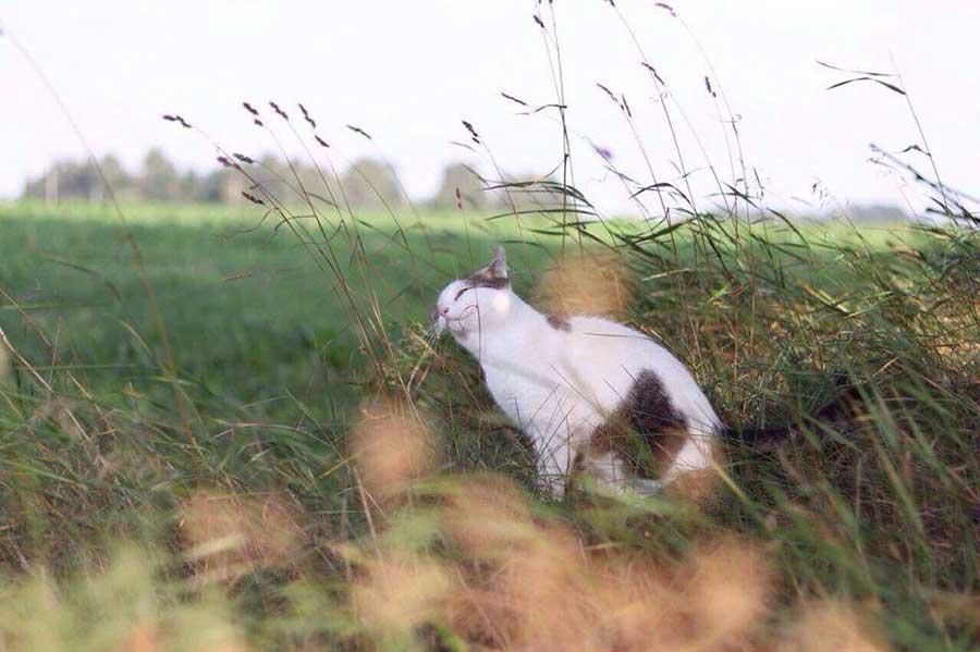 кошка трется мордочкой о траву