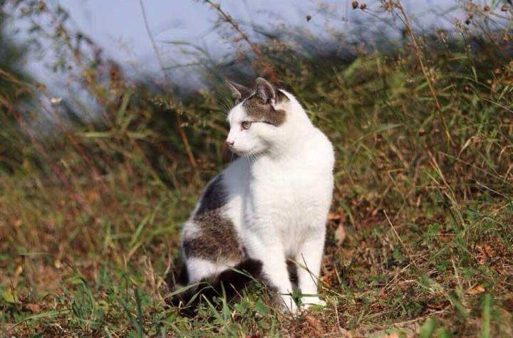 кошка сидит на поле