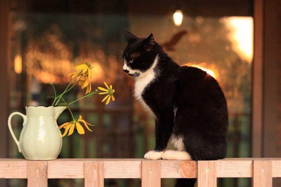 черная кошка сидит на веранде
