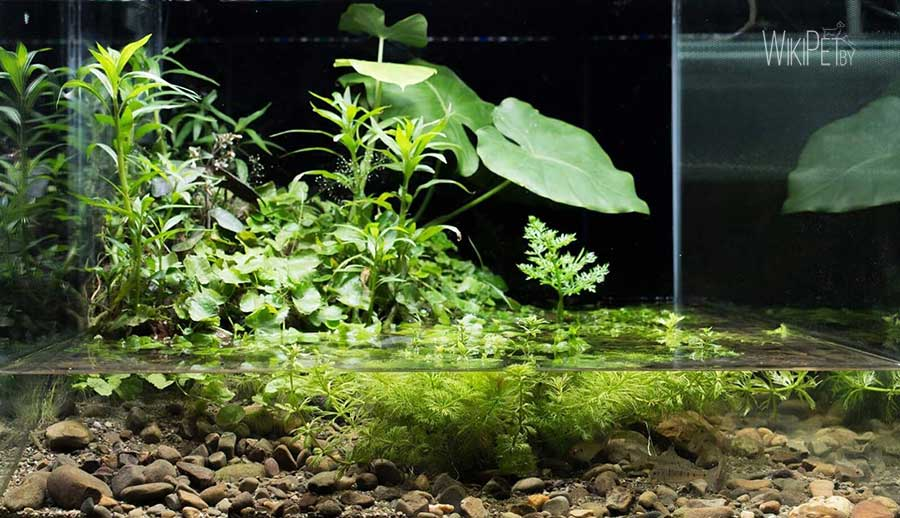 Открытый аквариум фото