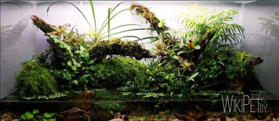 Надводные растения в аквариуме фото