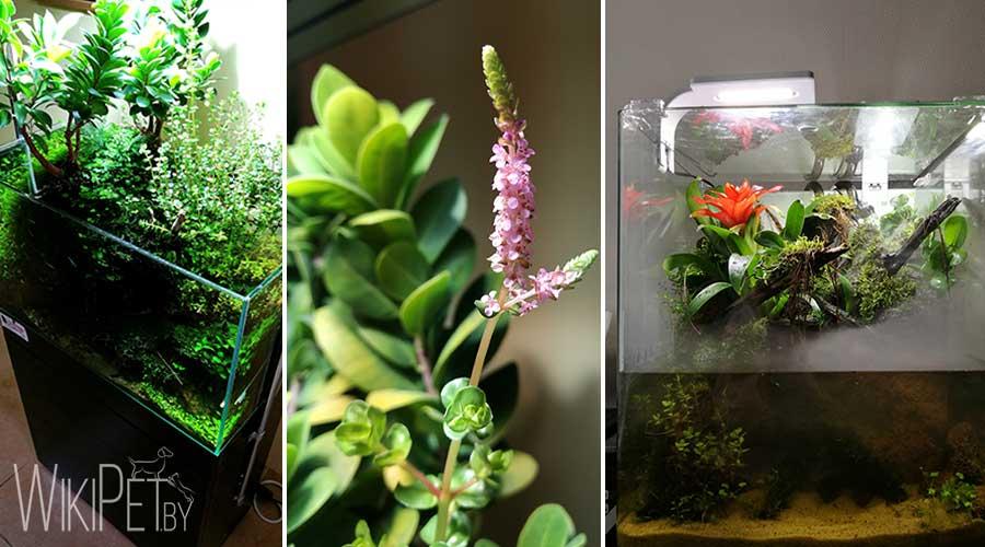 Надводные растения в открытом аквариуме фото