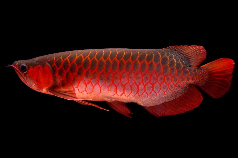 Экзотические рыбы в аквариуме