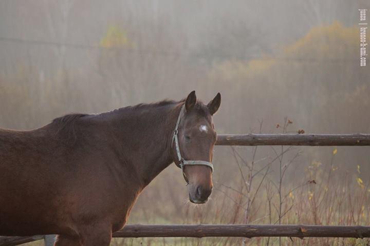 лошадь в тумане фото