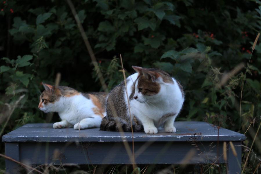 две кошки сидят на табуретке