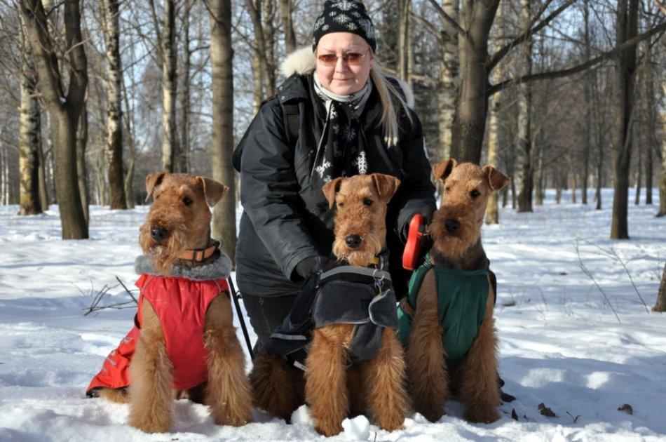 собаки породы эрдельтерьер сидят фото